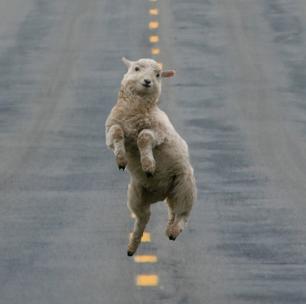 Who said sheep only jumped a fence when you count them at night? What if they danced......down the middle of the street....? It could happen...just thinking outside the box........