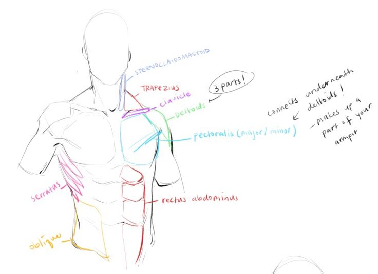 97 best Ref: torso/legs/arms images on Pinterest | Drawing tutorials ...