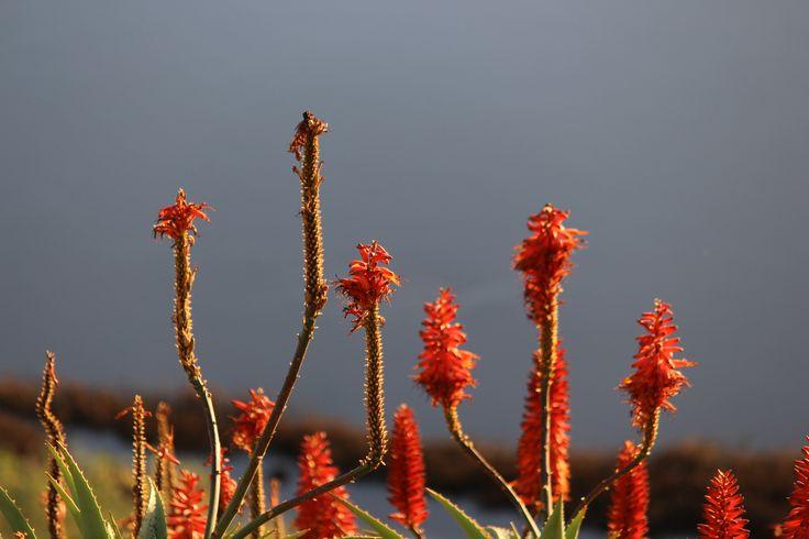 Port noarlunga flowers