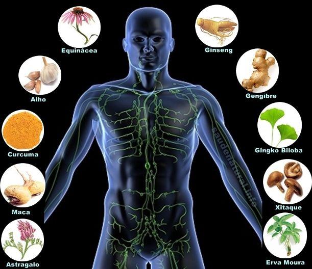 Plantas para aumentar sistema imunitário