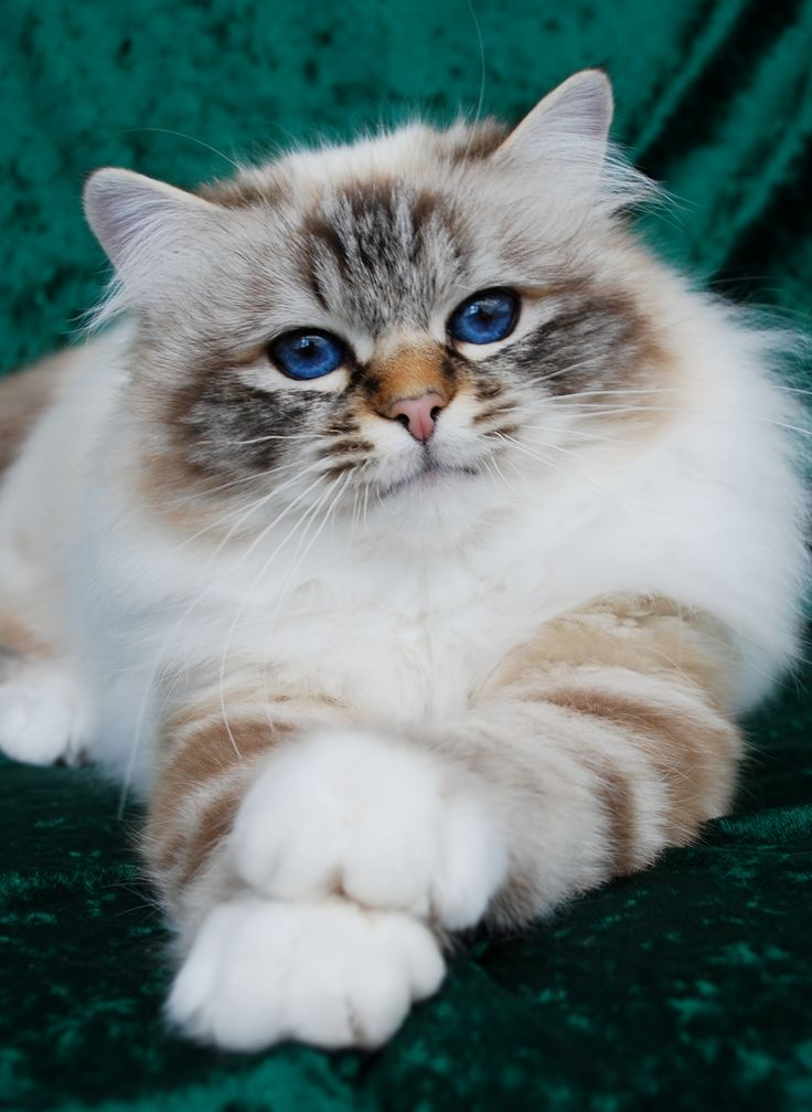 "** BIRMAN: "" Haz yoo evers felt likes yoo wuz borned in the wrong decade, or came justs just a bit too late and missed allz de good stuff in its hey-day? Dis be me first life and me feelz dat ways."