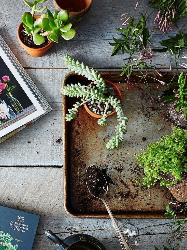 Fizemos uma seleção de dicas, inspirações e produtos de jardinagem adequados para cada situação - assim, você pode dar os primeiros passos sem medo de errar ou desperdiçar tempo e dinheiro.