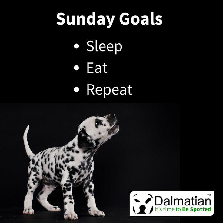 Sunday goals, eat, sleep, repeat. Sunday positivity. Weekend quotes. Dalmatian