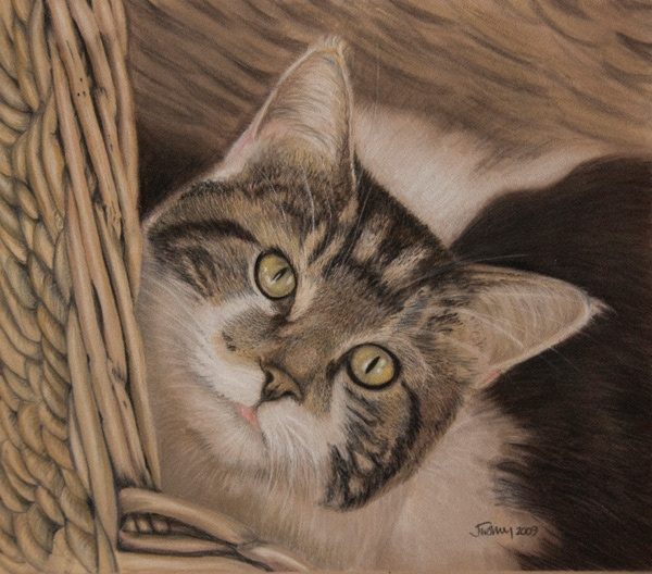 Henry in a basket. Pastel on velour