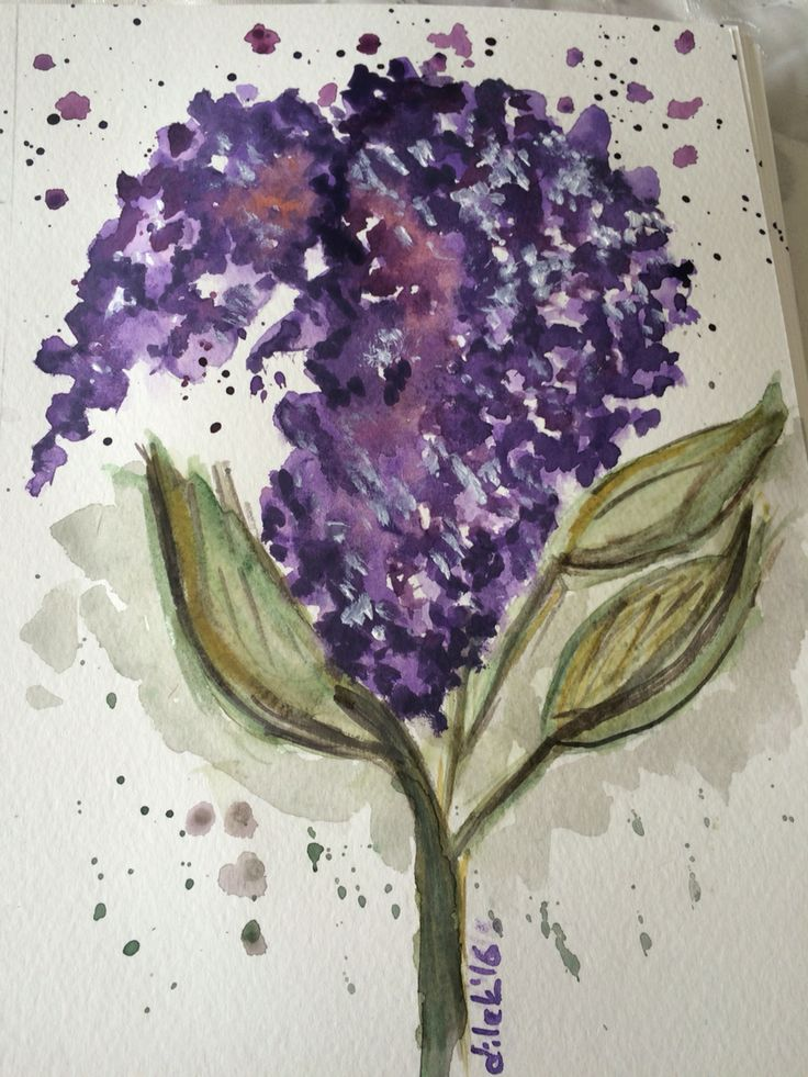 watercolour painting lilac