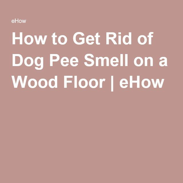 How Do I Get Rid Of Dog Pee Smell
