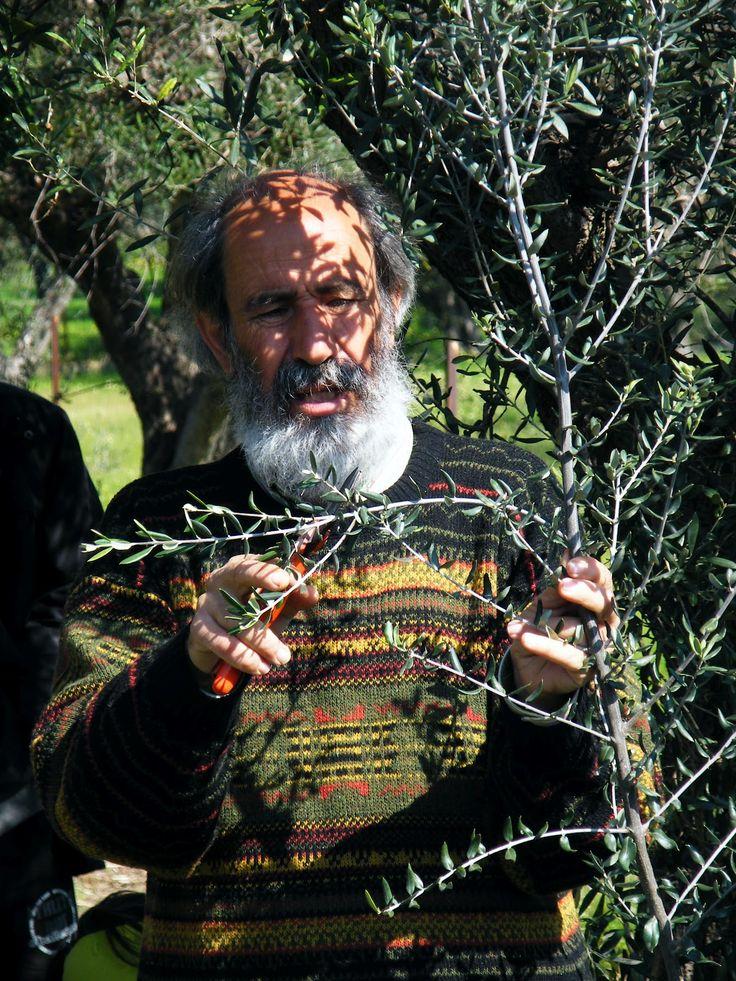 ΠΑΝΑΓ. ΜΑΝΙΚΗΣ διαθέτει ένα μικρό παράδεισο στο Κλησοχώρι Εδέσσης, έκτασης 25 στρεμμάτων, με δασικά δέντρα, οπωροφόρα – περισσότερες από 120 ποικιλίες- λαχανικά, φυτά χλωρής λίπανσης και σιτηρά. Φυτά και λαχανικά μεγαλώνουν μαζί στα «πόδια» των δέντρων και συνυπάρχουν αρμονικά.