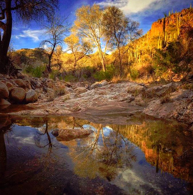 7022 Best Images About Outdoors On Pinterest: 311 Best Images About Tucson Outdoor Adventure On