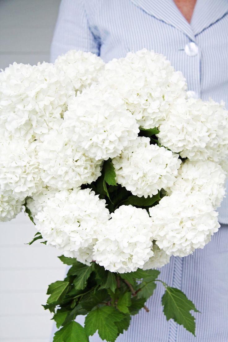 *A Country Farmhouse: Snowball BlossomsWedding Bouquets, Snowball Viburnum, Gardens, Snowball Blossoms, Country Farmhouse, Snowball Bush, Bridesmaid Bouquets, Flower, Viburnum Snowball