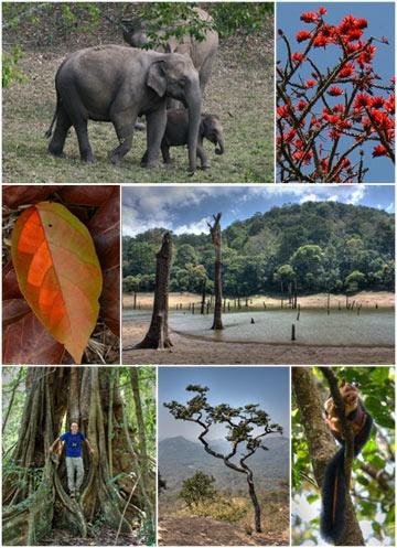 India Periyar National Park