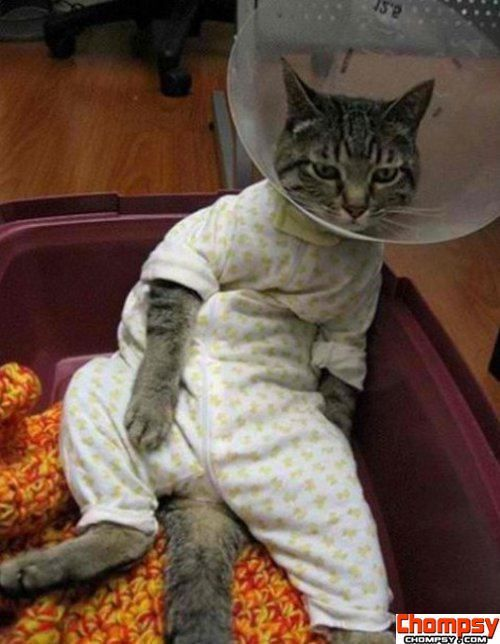 Unhappy cat is not happy