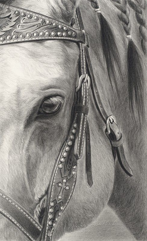 Equestrian (Equine) Fine Art: Pencil, Charcoal & Pastel Horse Drawings…