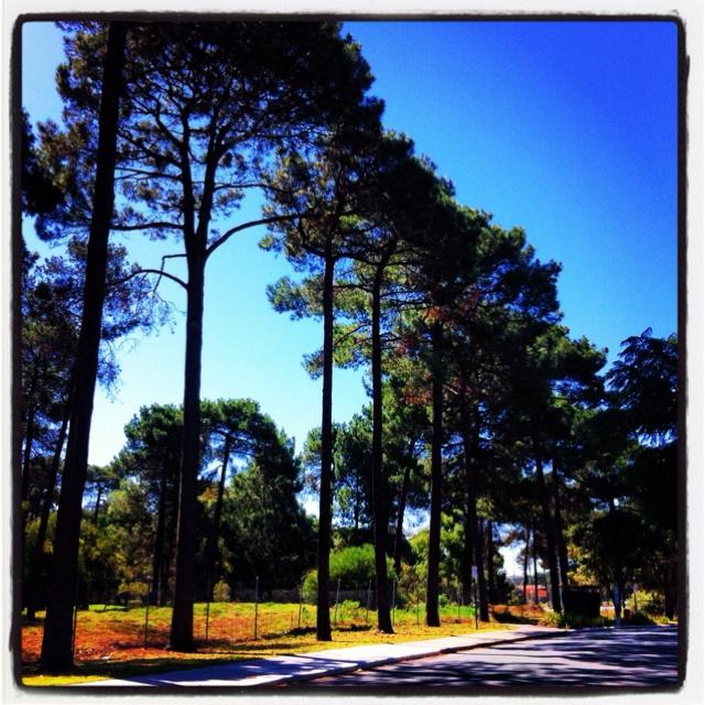 Trees, just trees: Trees 3, Trees Houses, Treasure Trees, Cities Trees, Beautiful Trees, Trees Obsession, Timeless Trees, Trees Clean, Pine Trees