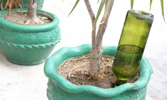 Ezért dugott minden szobanövény földjébe borosüveget! Zseniális ez a módszer, ezt mi is kipróbáljuk!