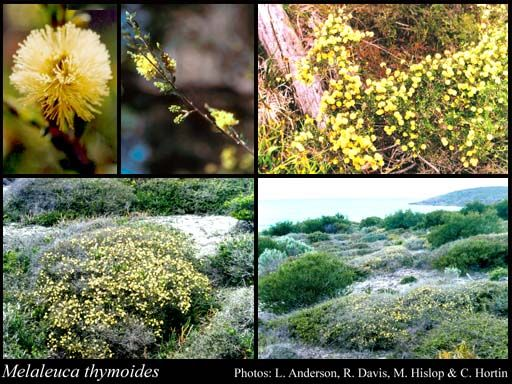 Garden Ideas Perth 26 best perth wa native garden ideas images on pinterest | native