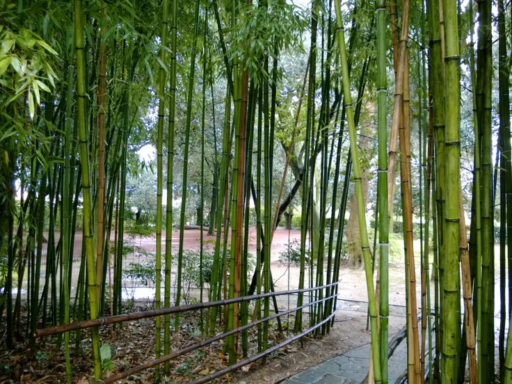 It 's rare to find a bamboo grove in #Umbria. Here we have a centenary one! http://www.montecorneo.com/