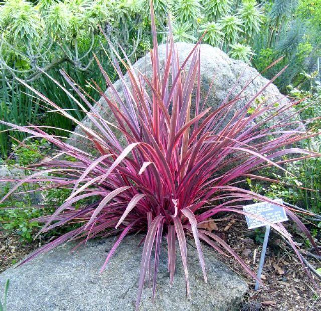 How To Prune Ornamental Grasses Ziergras Naturnaher Garten Pampasgras