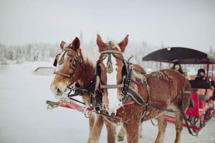 The Skiing Silver Star Wedding Sampler - Draht Photography