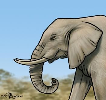 How to Draw Elephants, Step by Step, safari animals, Animals, FREE Online Drawing Tutorial, Added by makangeni, January 6, 2013, 3:04:01 pm