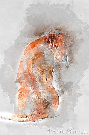 Rhodesian ridgeback watercolor art for your design.