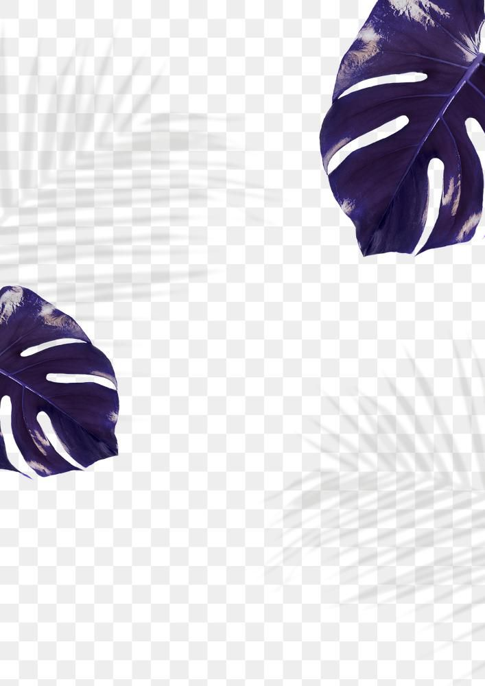 Indigo Monstera And Palm Shadow Leaves Png Free Image By Rawpixel Com Cuz Instagram Wallpaper Instagram Design Png