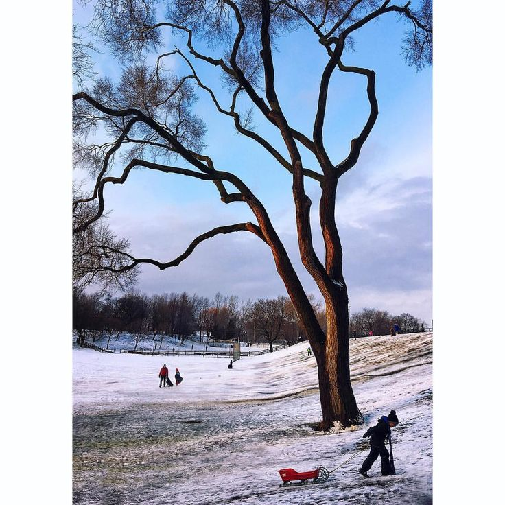 """Metal Dog Films'on Instagram: """". IG takeover~www.iancrysler. com Late afternoon in Withrow Park, Toronto, my local. Withrow Park is 21 acres and was constructed in 1910"""" @Accidental_ Parkland"""