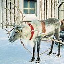 Lapland Day Trips and Holidays for Christmas and New Year. Santa Days. Best Prices with Lapland Christmas.co.uk
