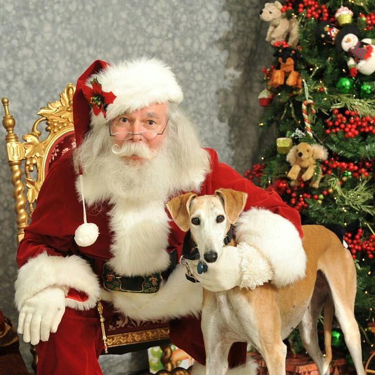 Senior gal Cabella got to meet Santa! She asked for her forever home for Christmas!