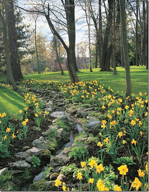 Carolyne Roehm - Weatherstone is Carolyn Roehm's property in Connecticut. This is a stream that has been purposely bordered by medium-sized, flat boulders and then accented by hundreds of daffodils.