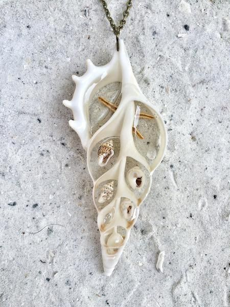 Sea Shell Slice