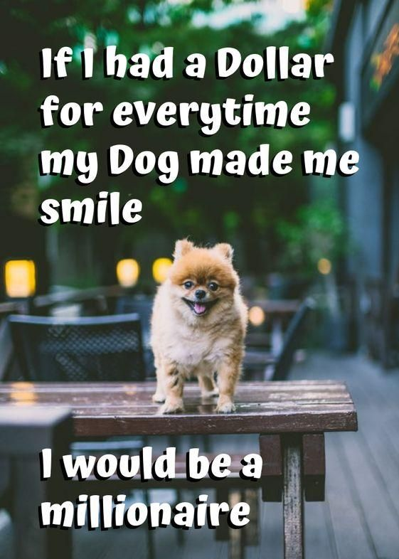 We'd be so wealthy! 😂🐶❤️ | Quotes for Animal Lovers