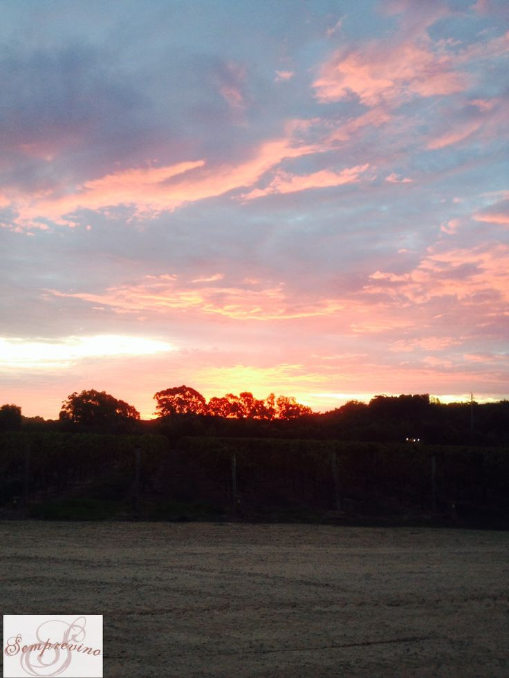 McLaren Vale Sunset. After a long difficult vintage it is nice to sit back and enjoy a sunset with a glass of wine. To simply soak in the scenery without worry. No more crushing to be done. Just fermenting grapes quietly bubbling away, becoming delicious McLaren Vale wine.