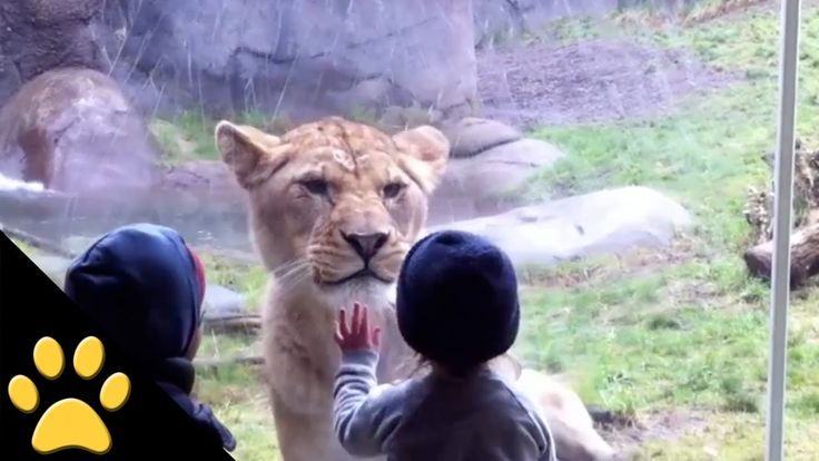 This video is totally awesome, the content mesmerizing and very entertaining, but it is also a fabulous study of children interacting with animals. Amazing Video! #Kids_at_the_Zoo! Funny or Scary? http://www.womanyes.com/amazing-video-kids-at-the-zoo/