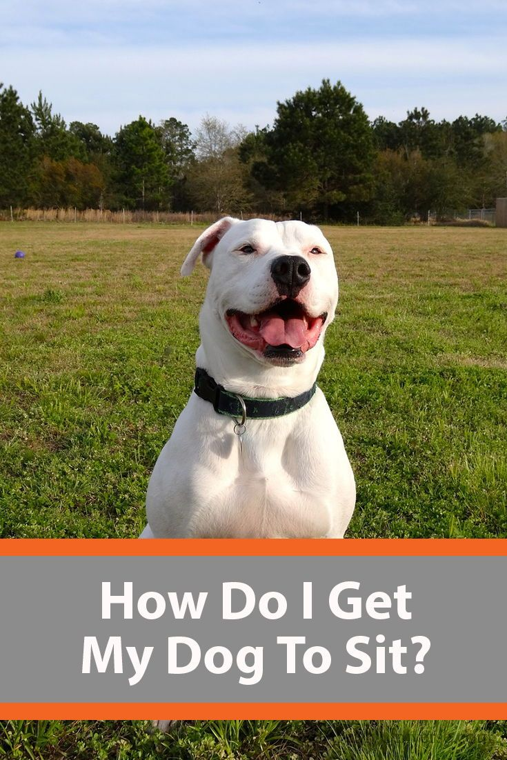 Teach Your Dog The Sit Stay Command A Step By Step Guide Dogs