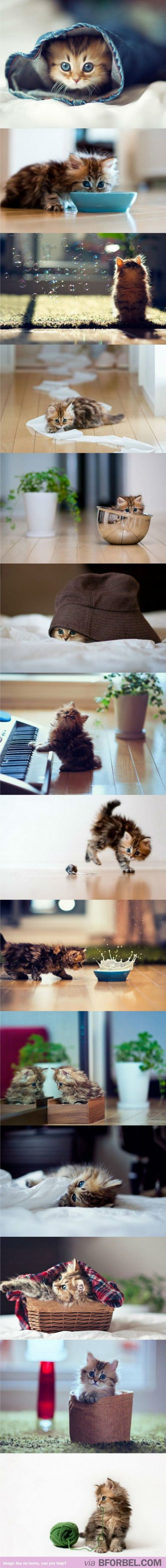 14 Pictures Of The Tiniest Kitten That Obliterates All Other Tiny Kitten Photos…