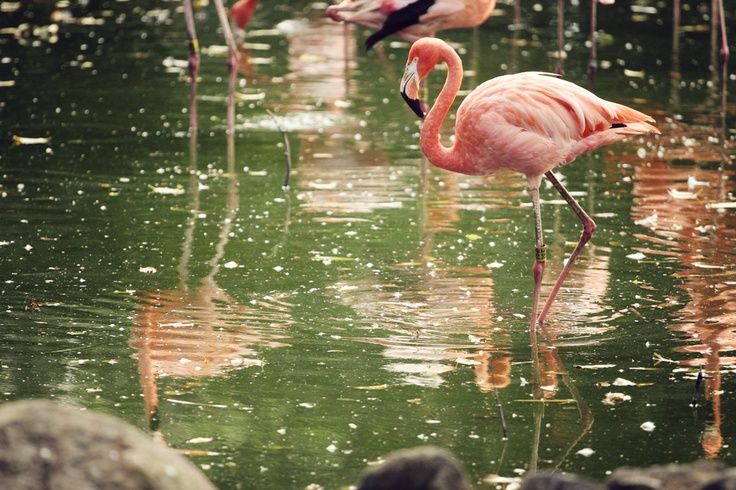 Flamingo lake 3