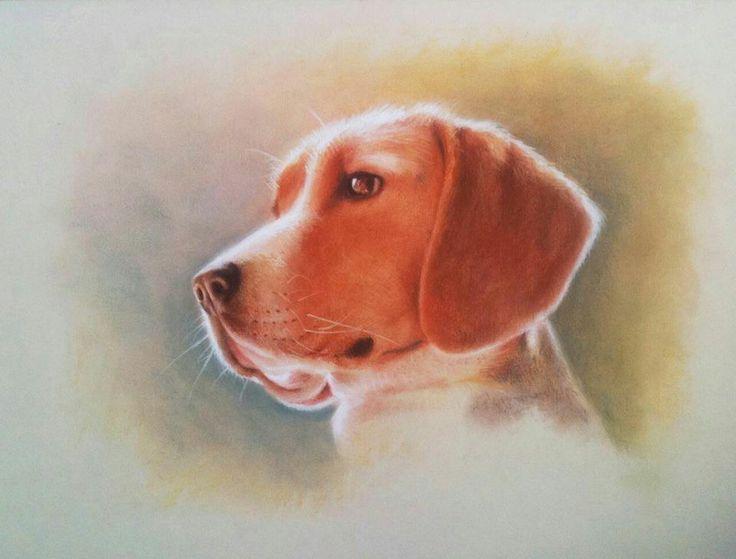 Beagle - Pastel Seco sobre Canson. 50 x 40 cms.