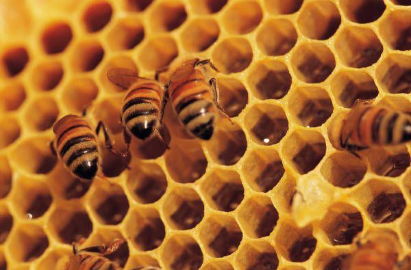 Bijen hebben het zwaar, Tuin en Balkon schrijft er regelmatig over. Geleerden, milieubeweging en fabrikanten vechten elkaar de tent uit over de vraag of dit veroorzaakt wordt door insecticiden, de zogenaamde neonicotinoiden. Zelf lijkt het