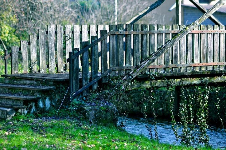ponte e natura