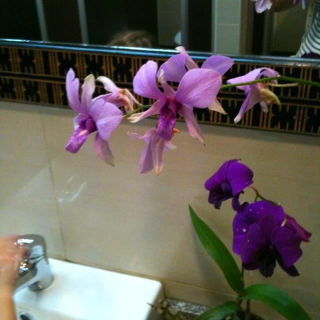 Orchid Fijian style