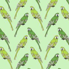 Jersey papegojor grön