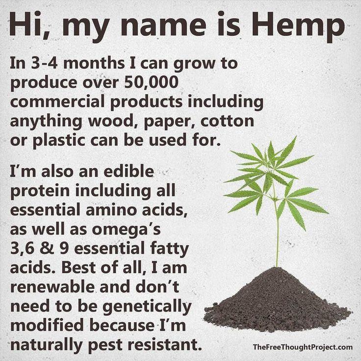 #marihuana #bitchimhigh #weed #marijuana #kush #cannabis #ganja #420 #high #stoner #smoke #weedporn #herb #instagood #instadaily #dope #love #relax #chillcom #dank #life #bud #hrbnlife #stonerdays #highlife #greenlife #lifted #maryjane #hightimes #herblife