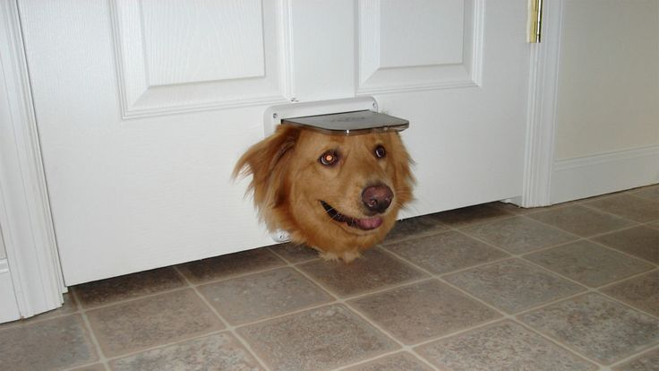 The Best Dog Door for Your Hound: Do You Have the Right One? https://www.realtor.com/advice/home-improvement/best-dog-door-for-your-pet/