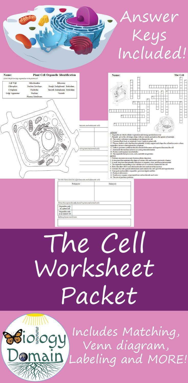 The Cell Worksheets Handouts And Animal Structure Diagram Worksheet Also Include Organelle Matching Scientist Types Of Cells Theory Vs Plant Venn Labeling