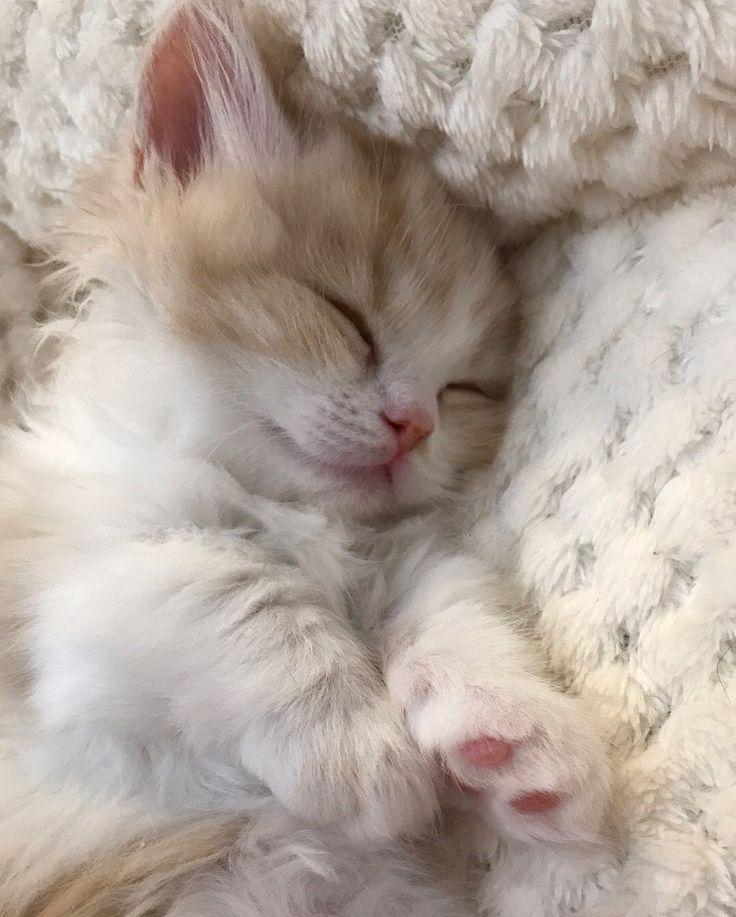 картинки сладко спящего молочные