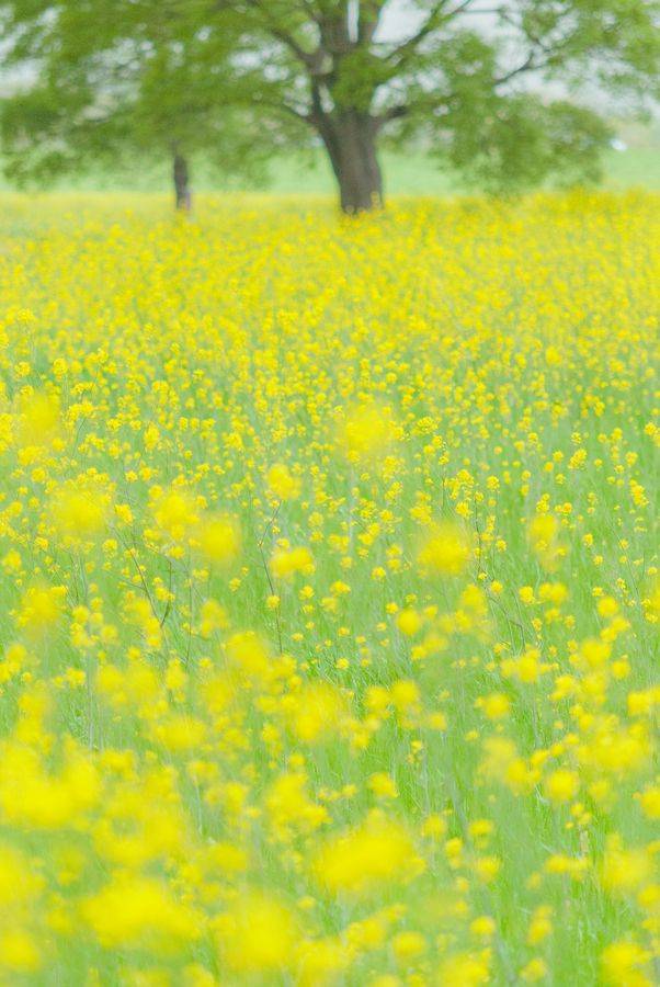 flowers spring field yellow - photo #14