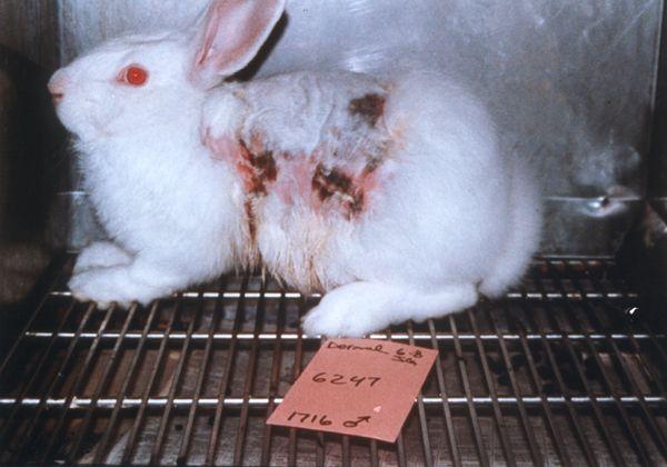 Foto: ONG No más vivisección