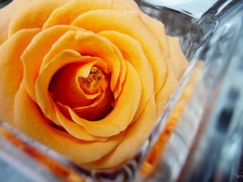 VASE VERRE et sa ROSE ABRICOT fleur naturelle éternelle stabilisée
