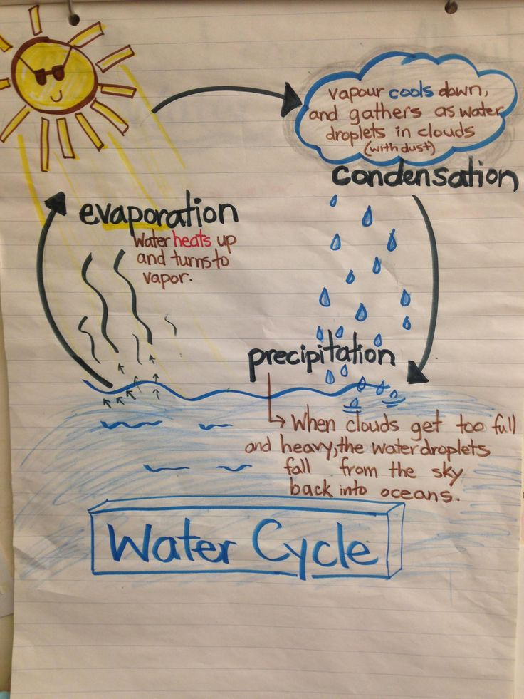 water cycle, anchor chart