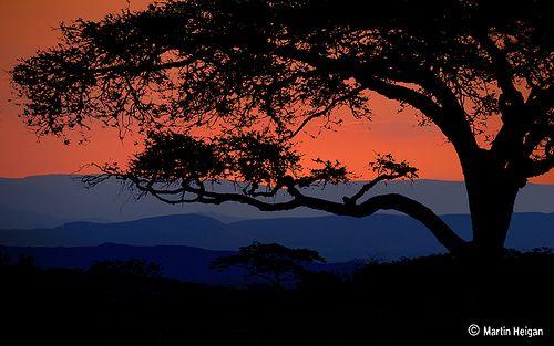 Bushveld Sunset, Nelspruit, Mpumalanga, South Africa (by Martin_Heigan)